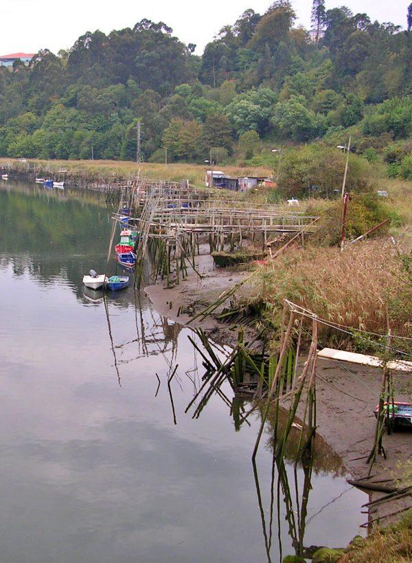 La Coordinadora Ecoloxista d'Asturies lamenta que el Principado siga apostando por acabar con la angula y con la anguila