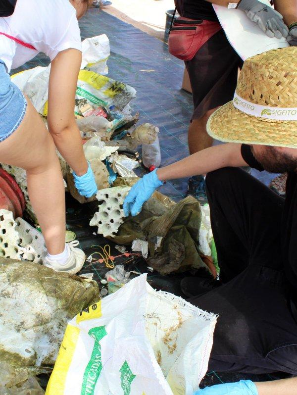 Sigfito se ha unido a la campaña de recogida de plásticos en el Parque Natural de la Albufera