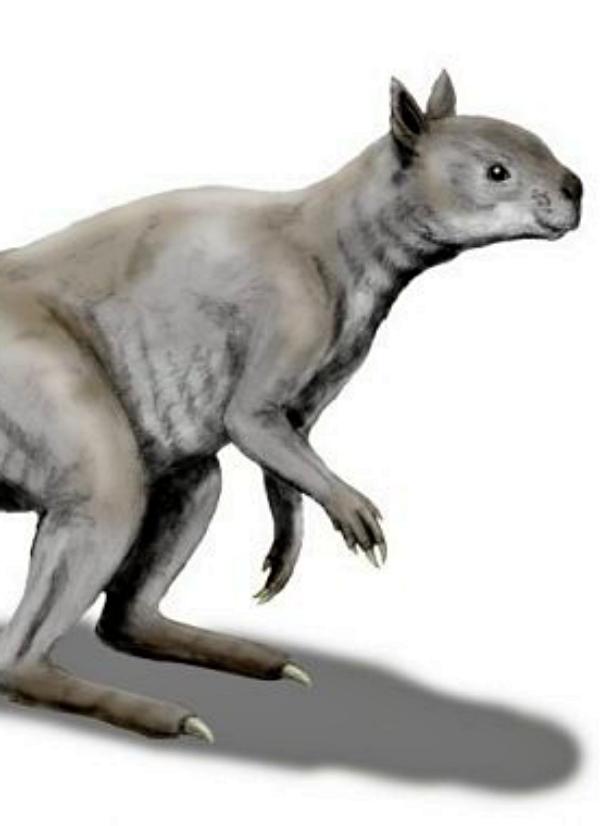 ¿Te imaginas un canguro con cráneo y mandíbulas de panda gigante?