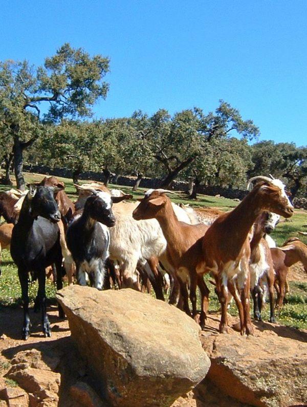 Medidas a favor de los ganaderos de Huelva para paliar la sequía