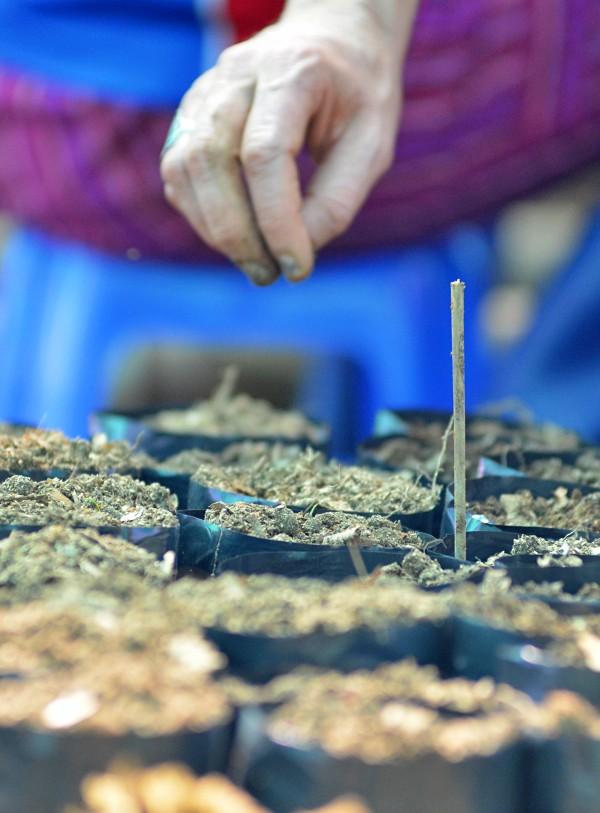 Una fundación de estudios amazónicos destinada a reforestar el pulmón del Planeta
