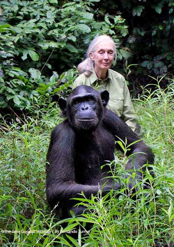 LOS40 Music Awards 2019 donará parte de la recaudación al Instituto Jane Goodall y a WWF (World Wide Fund for Nature)