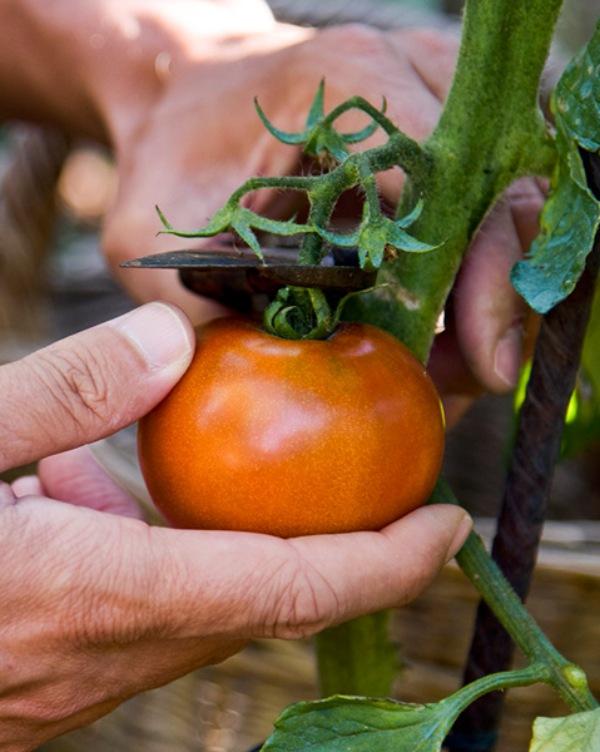 La dieta 'climariana', el nuevo estilo alimentario que no causa daño a nuestro Planeta