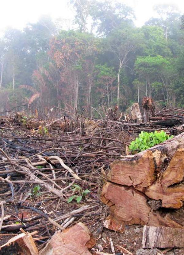 5 formas de ayudar a la Amazonia