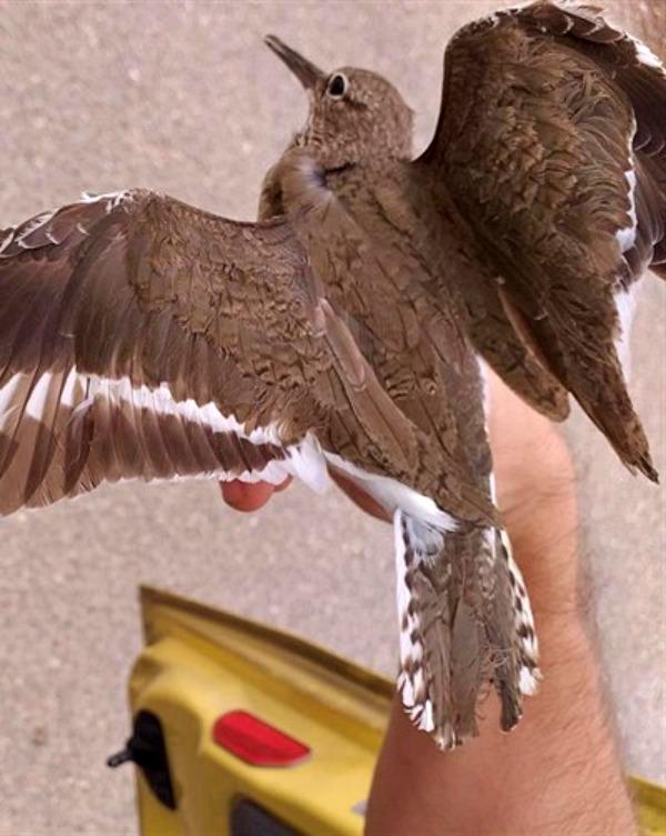 En 10 años, la Laguna de EDAR de Medina del Campo (Valladolid) ha logrado atraer 125 especies de aves diferentes