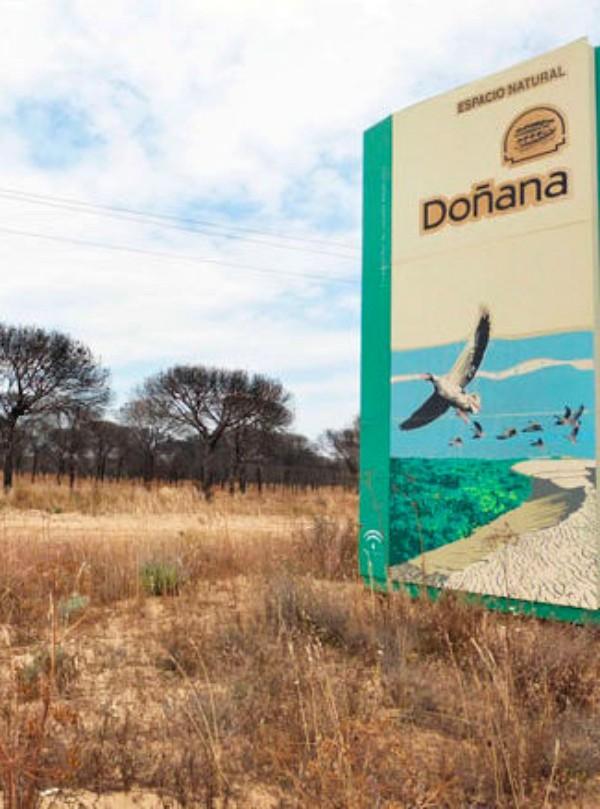 Ecologistas valoran la contribución de empresas privadas en la restauración de Doñana