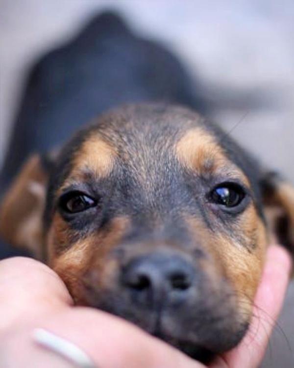 El impuesto por censar mascotas en Zamora, hará que 'aún haya menos perros identificados'