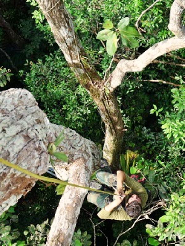 ¿Por qué los bosques están perdiendo su habilidad de almacenar CO2?