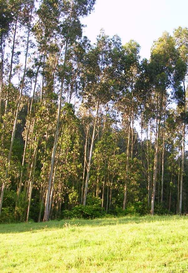Asturias. No se puede autorizar una nueva planta papelera con ocalitos nintens en Navia