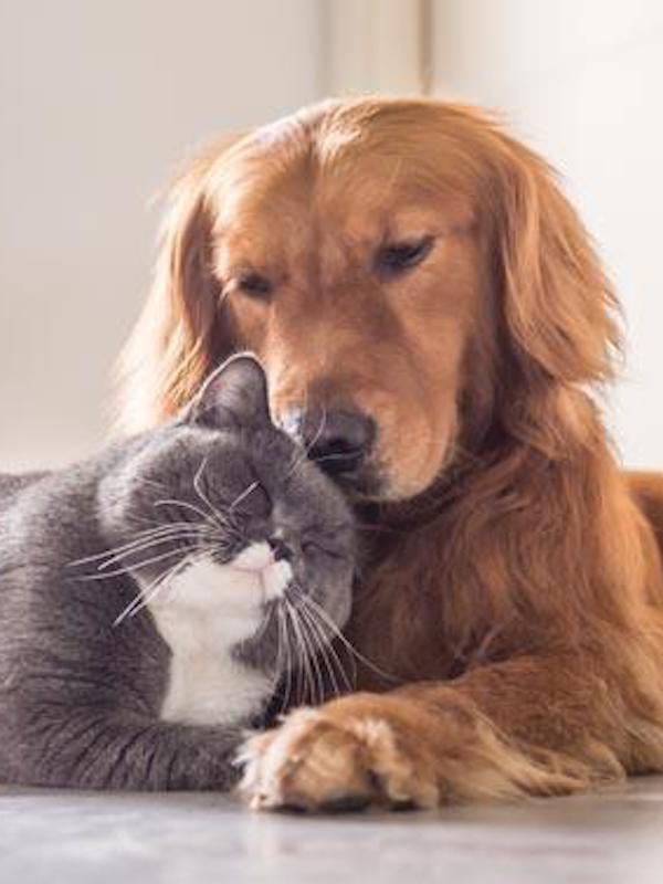 Animales de compañía. Acogidas y adopciones frente al COVID-19