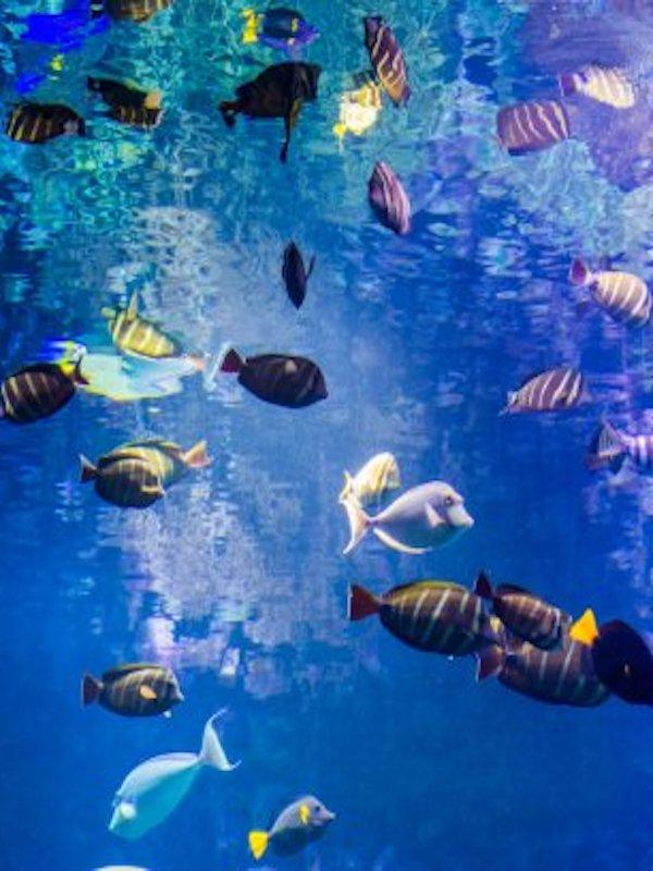 La vida marina puede recuperarse plenamente para 2050