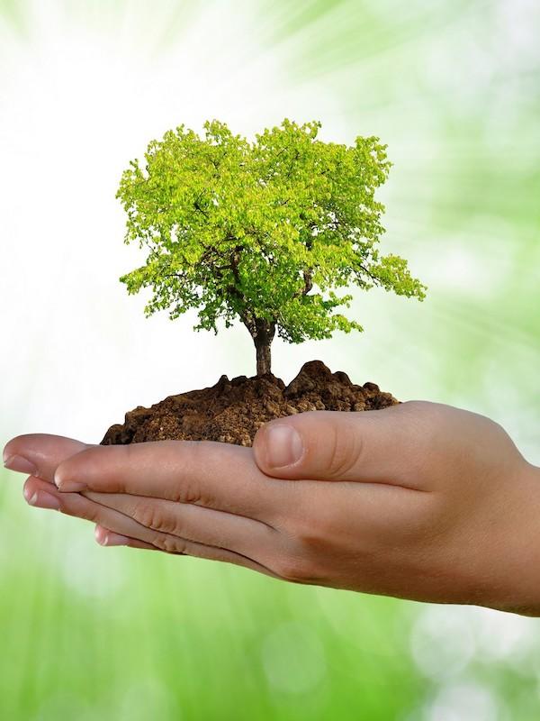 CORONAVIRUS: 'Una recuperación justa para las personas y el medioambiente'