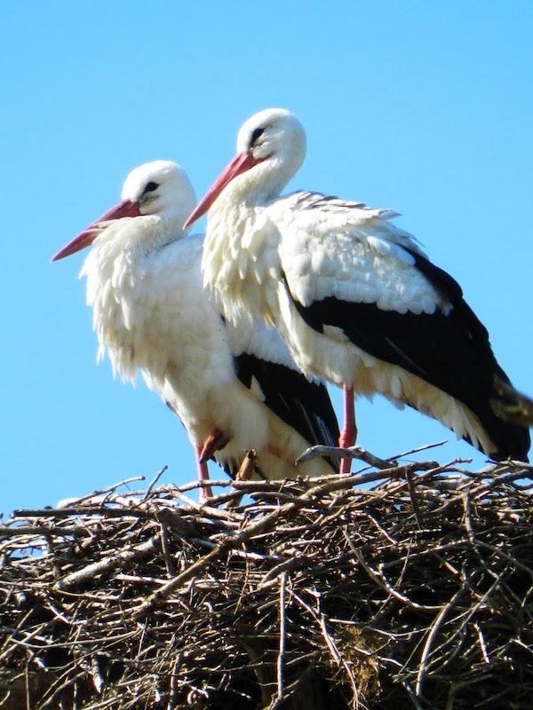 SEO/BirdLife entretiene en el confinamiento via naturaleza y diversas propuestas