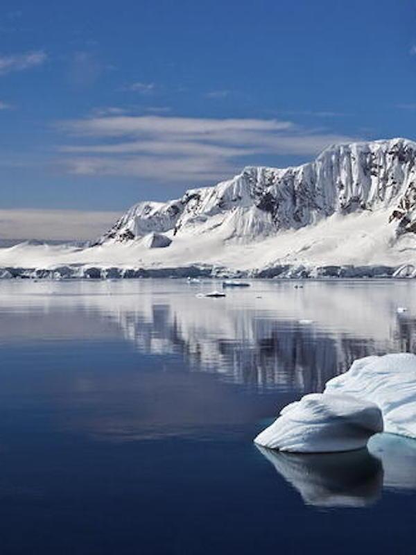 Una selva en el fondo marino antártico