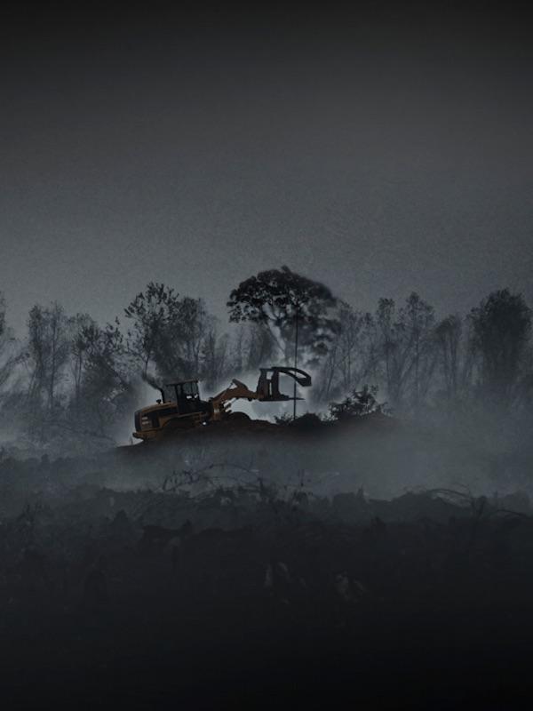 Informe sobre la relación directa entre la destrucción de la naturaleza, el cambio climático y el aumento del riesgo de pandemias