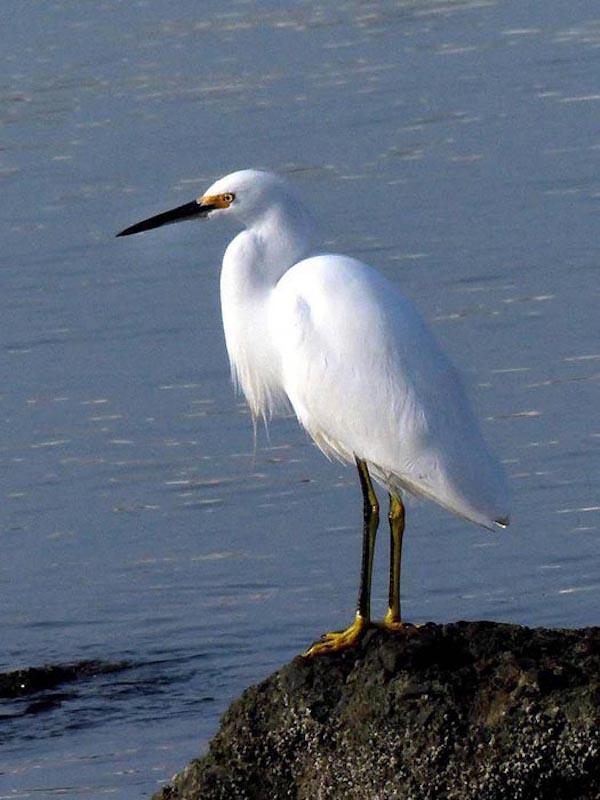 La inteligencia y adaptación reduce el riesgo de extinción de las aves