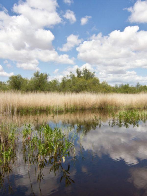 La Comunidad de Madrid aportara fondos para preservar el valor natural de los humedales