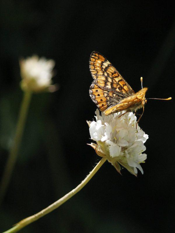 Arranca la 'Misión: Polinizadores. Restauración de hábitat para polinizadores y estudio del efecto de su declive en consumidores secundarios'
