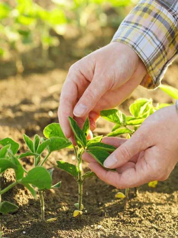 SOHISCERT nos explica las ventajas para la agricultura ecológica de las normas UNE