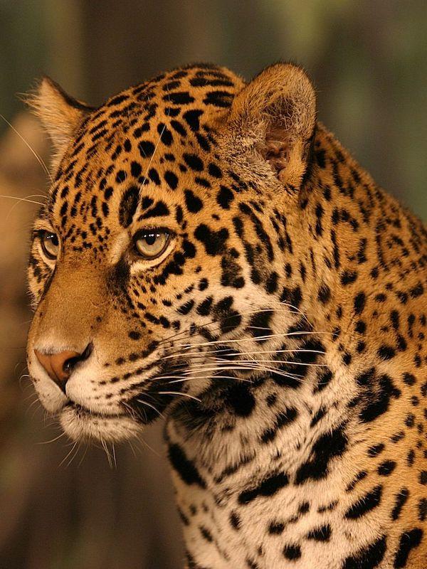 México pide a UMAs y PIMVS reforzar medidas de bioseguridad para proteger a la fauna silvestre del COVID-19