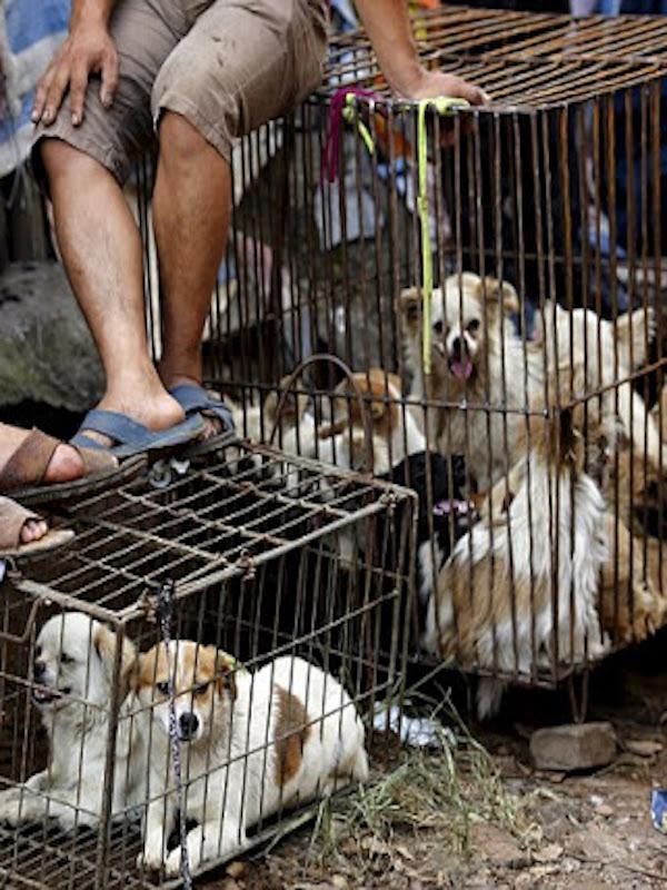 Barbarie. Cada 365 días 10 millones de perros son sacrificados por su carne y su piel en China