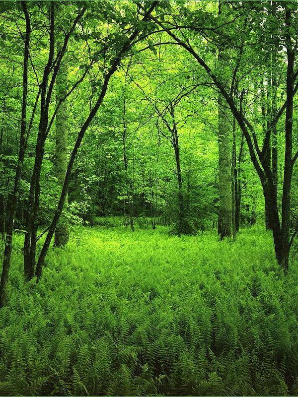 Los bosques maduros captan menos CO2 de la actividad humana de lo que se pensaba