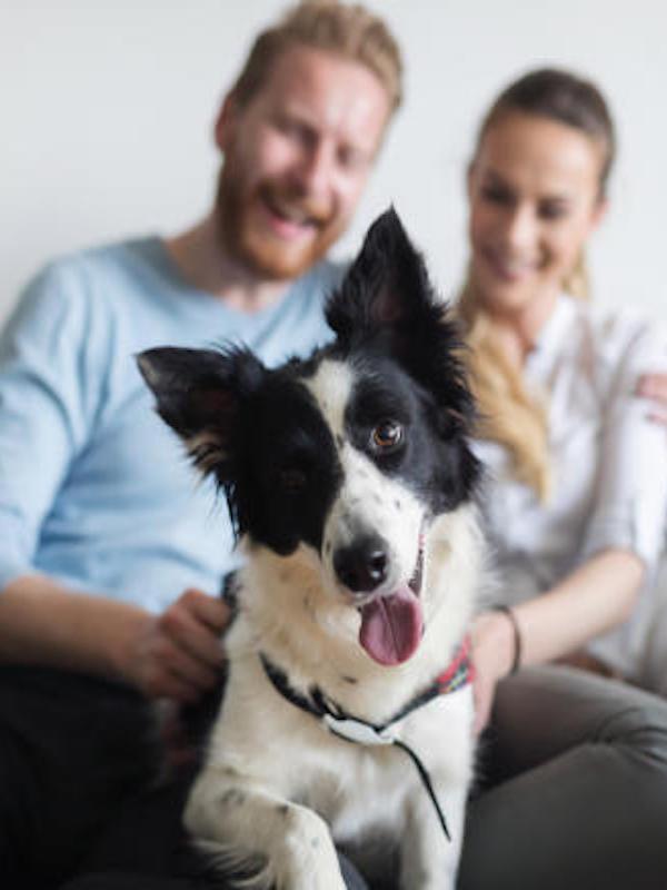 El núcleo veleño de Torre del Mar ofrecerá clases online para mejorar el bienestar de los perros en el confinamiento