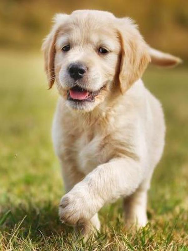 La demanda de cachorros se ha multiplicado 'exponencialmente', ojo con las consecuencias