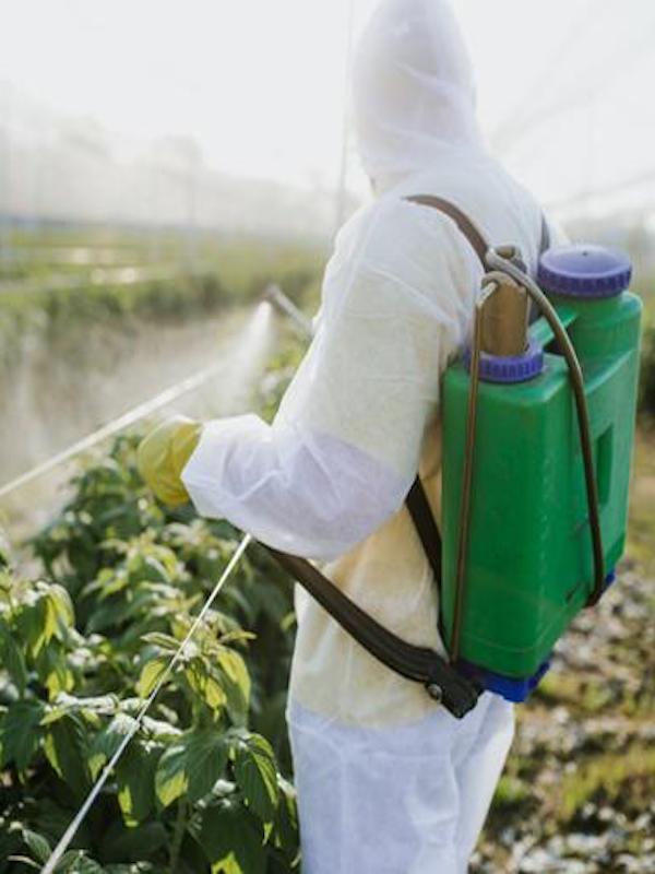 Europa cae en la 'desidia' al evaluar el riesgo real de los pesticidas