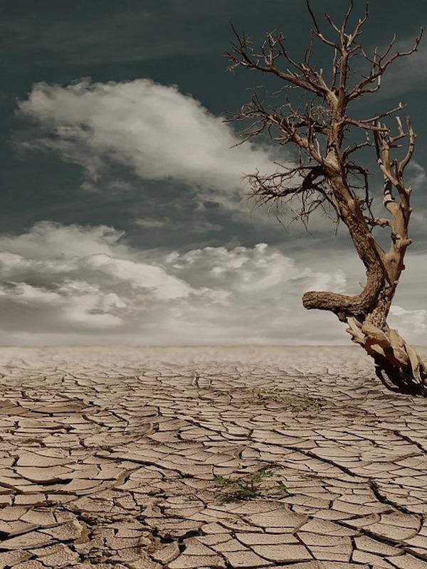 Acción global por el clima