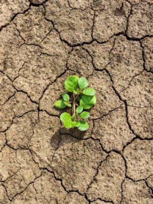 ONG por el clima reclaman que