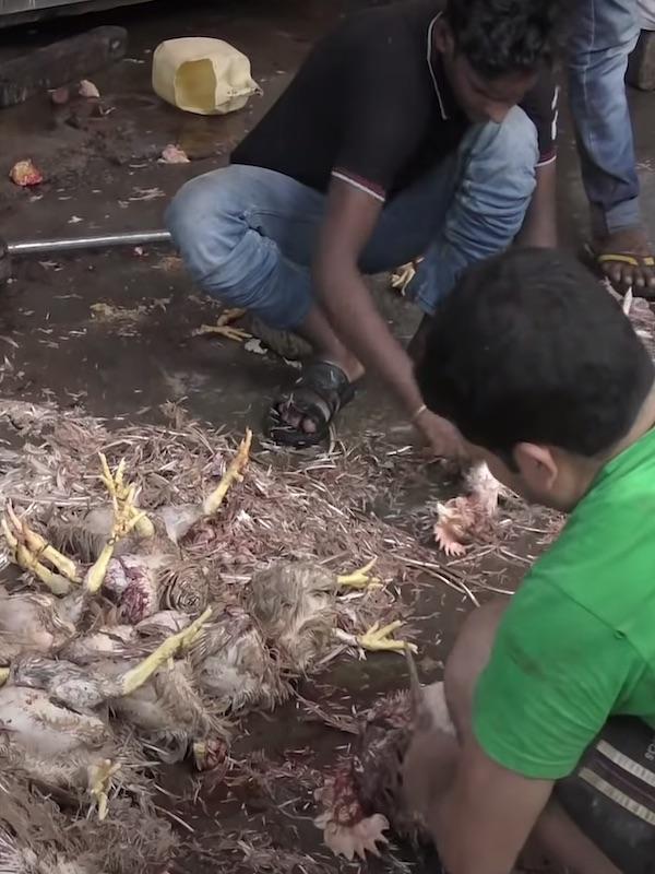 'Arde Troya' en Twitter exigiendo el FIN de los mercados húmedos de animales