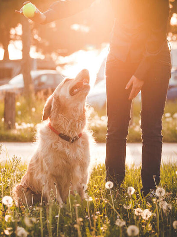 Las mascotas no son una fuente importante de infecciones para los humanos