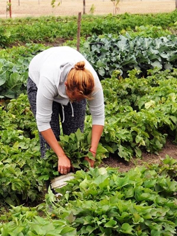 Navarra exige con una sola voz que se permitan actividades agrarias en las huertas de autoconsumo