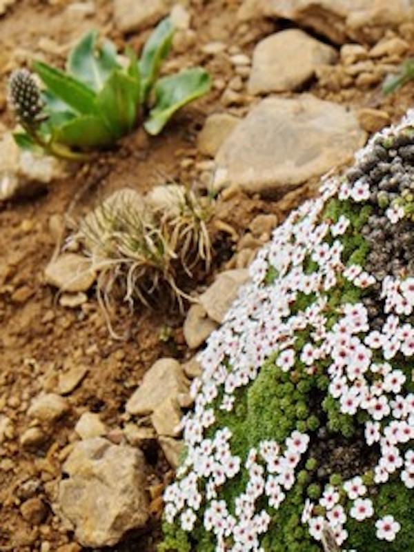 Descubren en China la flora alpina más antigua de la Tierra