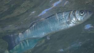 Los ecosistemas marinos de hace 5.000 años podrían anticipar los efectos del calentamiento global