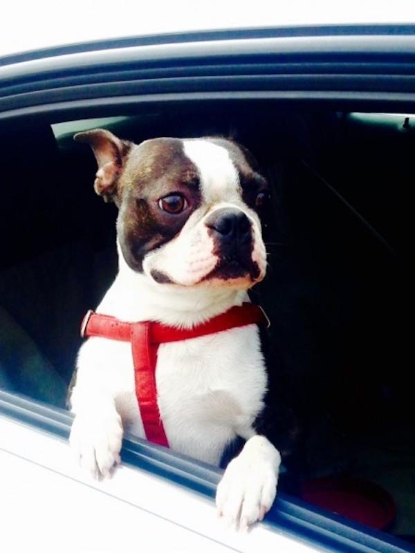 Muchos españoles que viaja con animales en el coche lo hace sin ningún sistema de seguridad