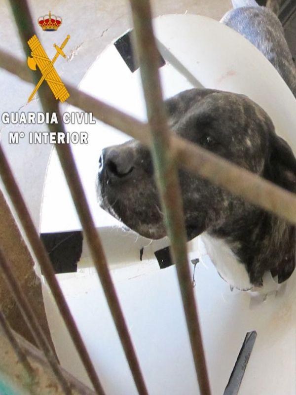 Dos imputados por abandonar a dos perros en Tafalla y Viana