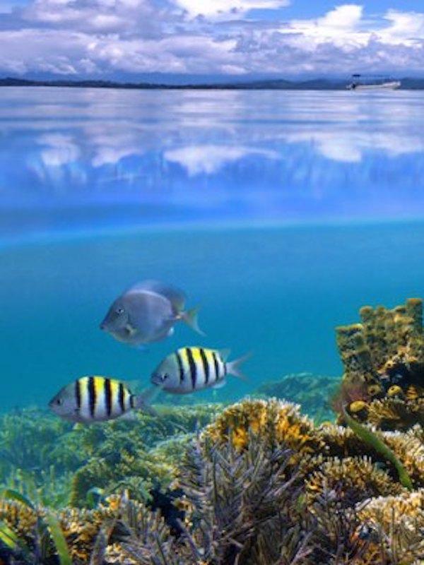 La clave de la optimización del espacio está en los arrecifes de coral