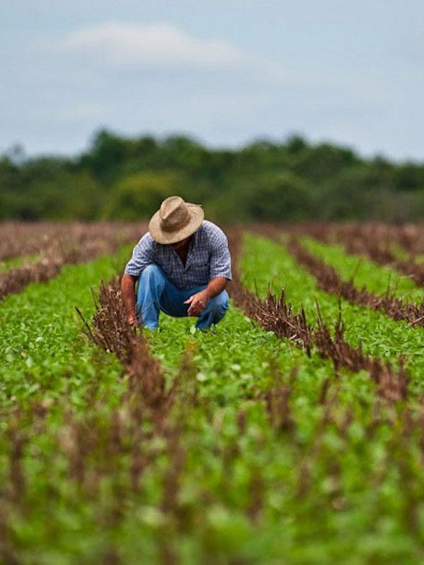 La agricultura reemplaza a los combustibles fósiles como la mayor fuente humana de azufre para el medio ambiente