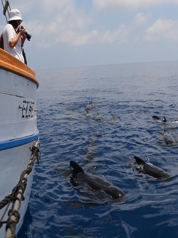 ANSE recorre 2000 kms de las costas de la Región de Murcia y Andalucía estudiando calderones comunes y otros cetáceos
