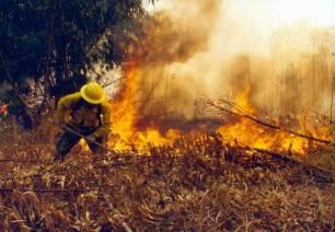 Las hectáreas afectadas por incendios forestales en C-LM se reducen un 72%