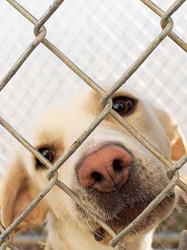 Perrotón esterilizará con laparoscopia a perros y gatos de protectoras con bajos recursos económicos