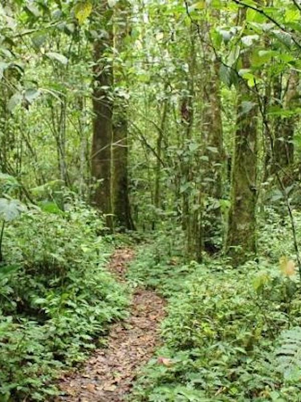 La restauración de los bosques tropicales degradados genera grandes ganancias de carbono
