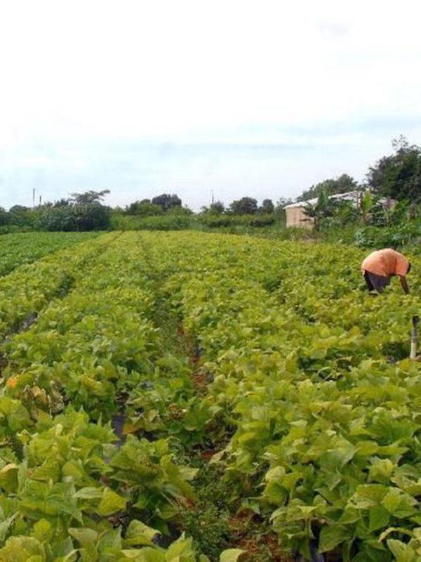 Analizan expertos resiliencia climática y manejo de plagas mediante sistemas agroecológicos mexicanos