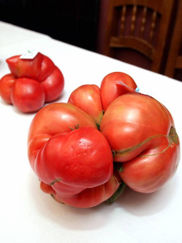 II Feria Nacional del Tomate Antiguo