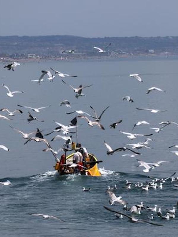 Si cuidamos los océanos nos podrían aportar la cuarta parte de la alimentación mundial para 2050