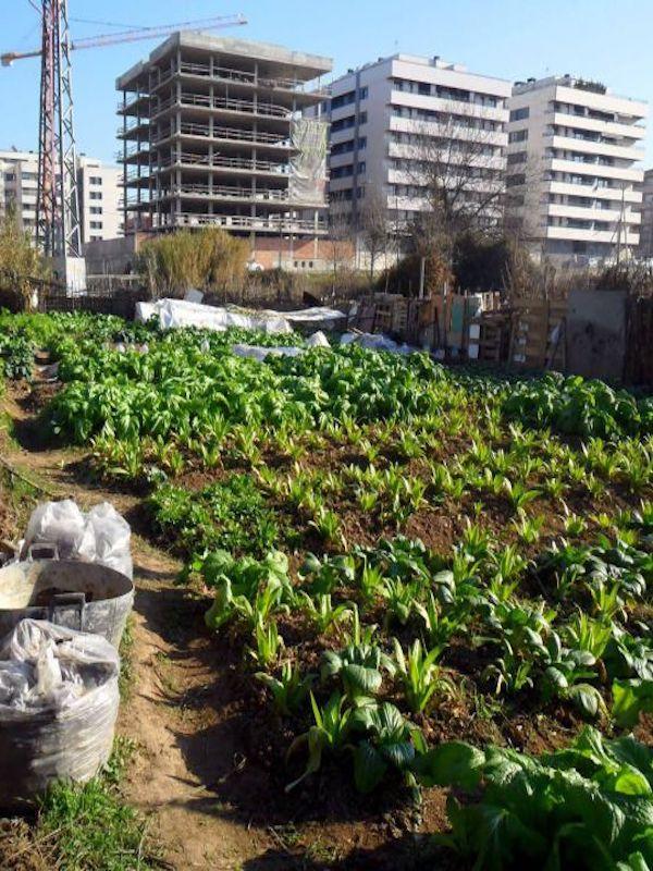 Córdoba no puede ni debe abandonar el proyecto de huertos urbanos