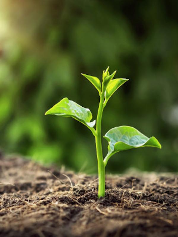 Millones de euros para apoyar la contratación en la economía verde
