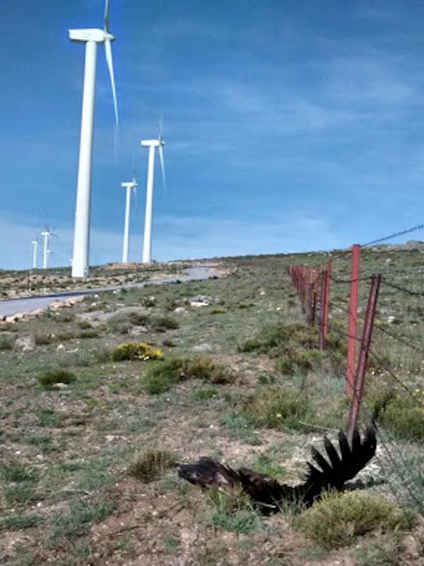 Evitar muertes de aves en parques eólicos es más fácil de lo que podría parecer